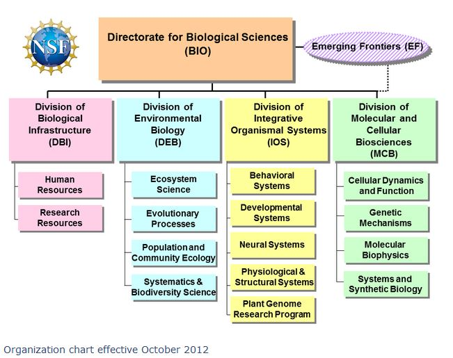 BIO organizational chart