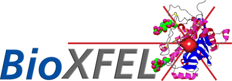 bioxfel_logo.png